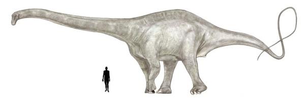 dinosaurios-s-supersaurus_0001.jpg
