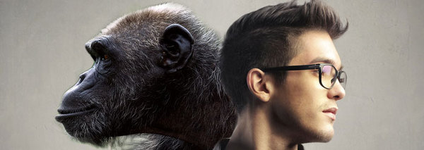 human_chimp_brains_wide.jpg